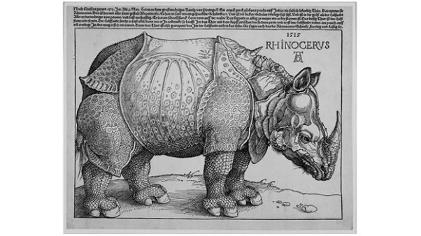 bsl_durer_rhinoceros_channel_624x351