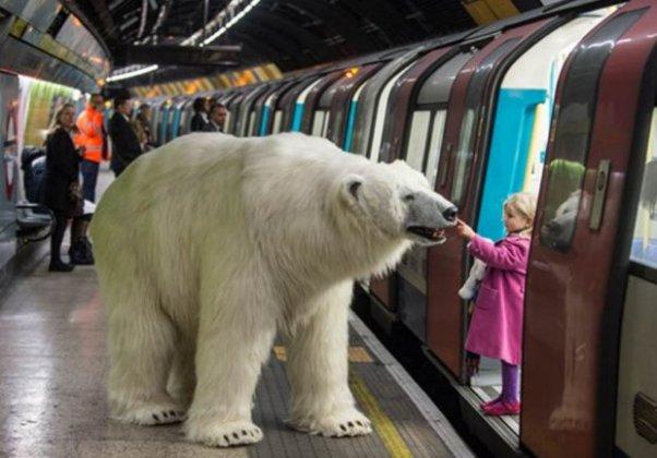 polar bear child stroking tube