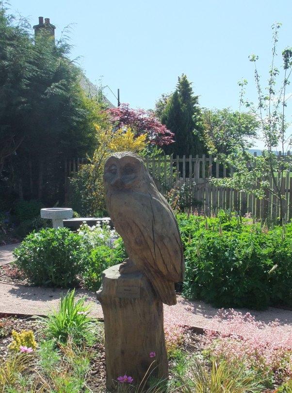 StM Owl